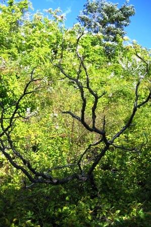 растительность на склоне