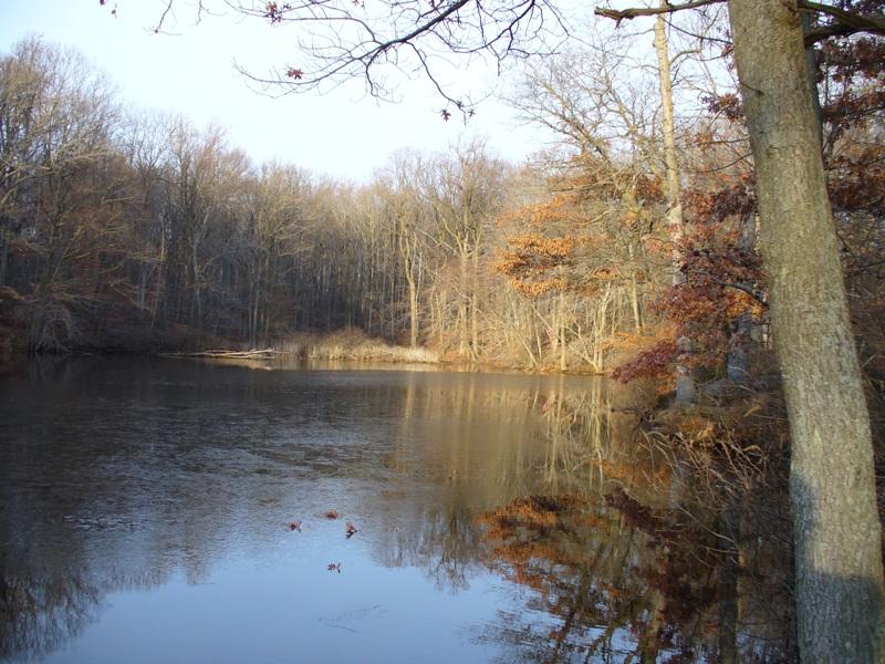 Wolfs Pond